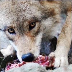 GC10: Animal Avatars (Voting)