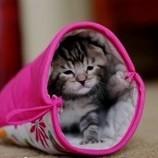 Kittenmitten