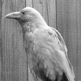 RavenFlame