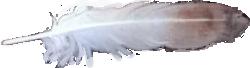 FeatherOrig.png