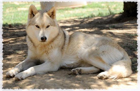 large.alicewolf.jpg.2ad1fe862de3aa72738c