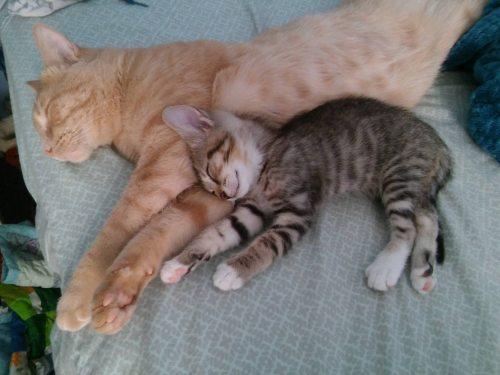Vincent and Valentine